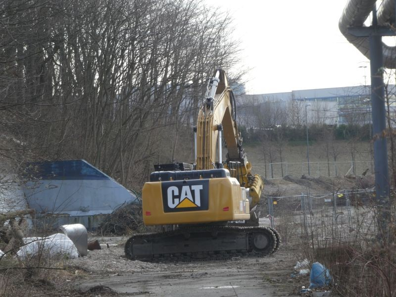 336 cat.jpg