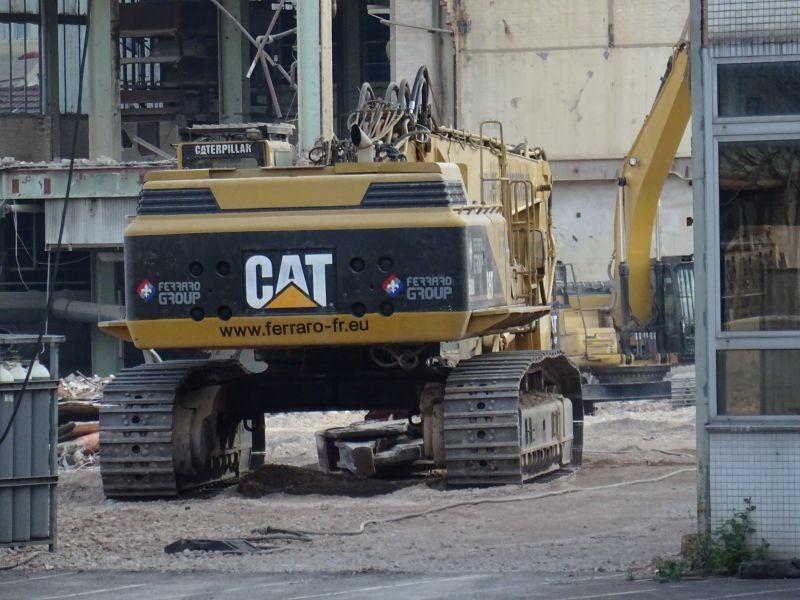 5080 cat.jpg
